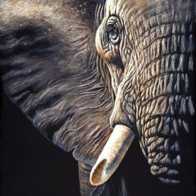 8x10 giclee print, Elephant Gaze by artist Cynthie Fisher