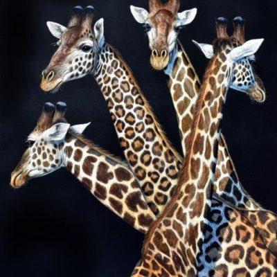 18x15 giclee print, Giraffa leopardis by artist Cynthie Fisher