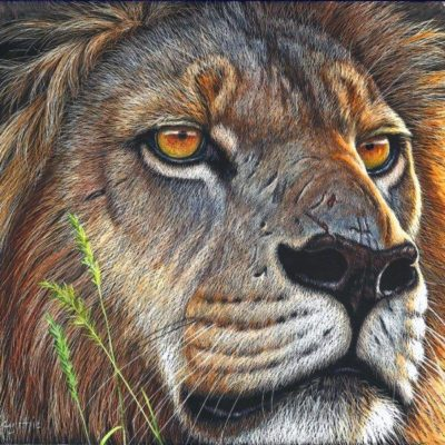 8x9 giclee prints, Lion Gaze by artist Cynthie Fisher