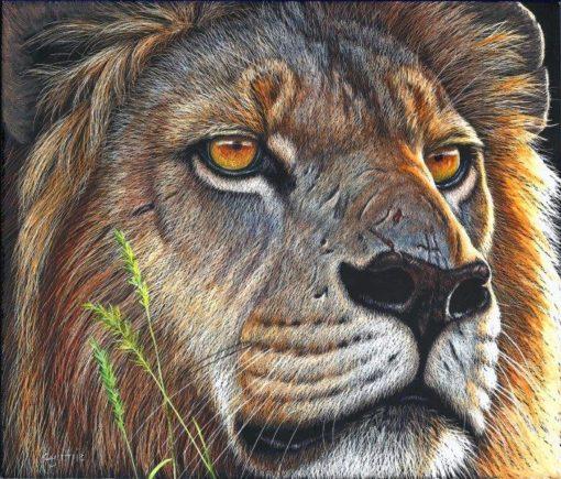 8x9 giclee prints, Lion Gaze by artist Cynthie Fisher